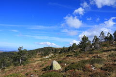 Pinjeskog i pyrenean landskap i Aude, Frankrike Royaltyfria Foton