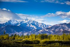 Pinjeskog och berg Arkivbilder