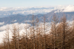 Pinjeskog och berg Royaltyfria Foton