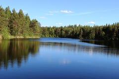 Pinjeskog och sjö Arkivfoto