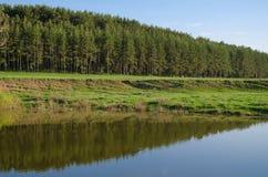 Pinjeskog på bankerna av floden Arkivfoton