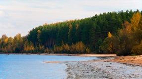 Pinjeskog på bankerna av Volgaen arkivfoto