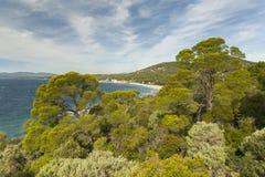 Pinjeskog på Côte d'Azur Royaltyfri Fotografi