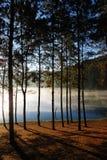 Pinjeskog på Pang Ung, Mea Hong Son Province, Thailand arkivfoton