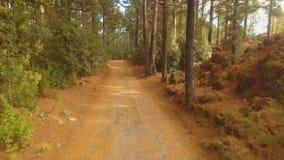 Pinjeskog som är hög i bergen på en klar solig dag stock video
