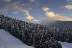 Pinjeskogen övervintrar berget Royaltyfri Bild
