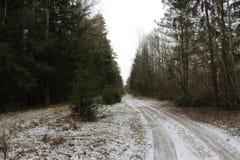 Pinjeskogen i tidig vår avverkar precis ut den inte sjuka vägen för snövårskogen som det gamla Smolensky området på sidan av den  royaltyfri foto