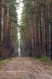 Pinjeskogreserv Arkivfoton