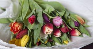 pink желтый цвет красных тюльпанов лиловый Стоковые Фотографии RF