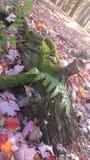 Pink листья Стоковое Изображение RF