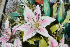 Pink лилия Стоковое Изображение