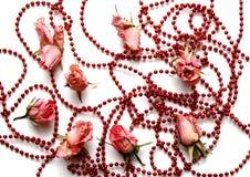 pink розы Стоковая Фотография RF