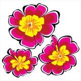Pink цветки петуньи изолированные на белизне Стоковое Изображение