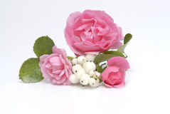 Pink. Roses and pearls on white background Stock Photos