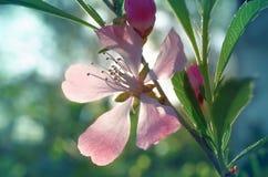 Pink stock afbeelding
