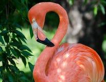 Pink Royalty-vrije Stock Afbeeldingen