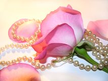 Pink. Rose with backside view and pearls royalty free stock photos