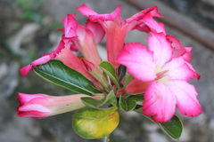 Pink Stock Fotografie
