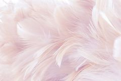 Pink Abstract background Bird and chickens feather texture ,blur style and soft color of art design.  stock photography