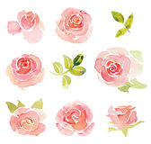 Pink abstract roses elements watercolor Stock Image