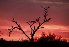 Pink African sunrise Royalty Free Stock Photo