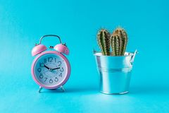 Pink alarm clock with cactus on blue background. Minimal concept royalty free stock images