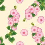 Pink Alcea Rosea - hollyhocks, Aoi on Beige Ivory Background. Vector Illustration Stock Photo