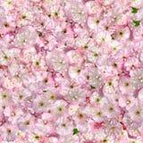 Pink almonds seamless pattern Stock Image
