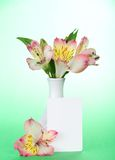 Pink alstroemeria in a vase and an empty card Stock Image