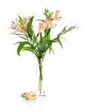Pink alstroemeria in a vase stock image
