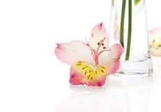 Pink alstromeriya near a vase Royalty Free Stock Photography