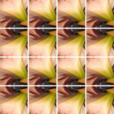 Pink Amaryllis flower texture inside square shapes Stock Photos