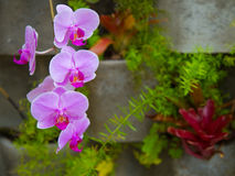 Free Pink And Purple Orchids On A Vertical Garden Royalty Free Stock Image - 93837606