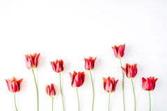 Free Pink And Red Tulips And Green Leaves On White Background Stock Photos - 72267233