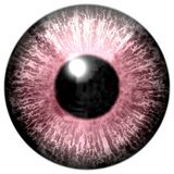 Pink animal wolf 3d eyeball with white background. Eye texture stock illustration