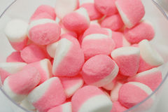 Pink ans white candys with sugar Royalty Free Stock Photo