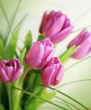 Pink aroma of the spring Stock Image