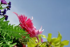 Pink artificial flower on sky background Stock Photo