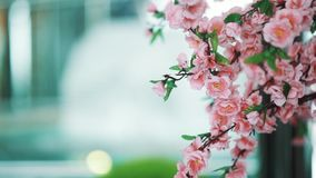Pink artificial flowers in front of modern style interior fountain. Blue cold tones, focus pull close up stock video footage
