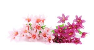 Pink artificial flowers. Stock Image