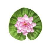 Pink artificial lotus Stock Images