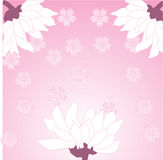 Pink Asian flower background Royalty Free Stock Photo