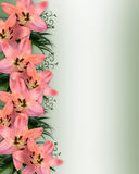 Pink Asian Lilies Floral Border. Image and illustration composition of pink lilies for wedding, birthday, Easter, party invitation with copy space Stock Photo