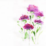 Pink aster flower on a white background. Painted in watercolor Royalty Free Stock Image