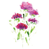 Pink aster flower on a white background Stock Images