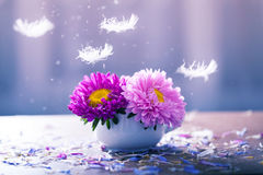 Pink aster flowers in a vase Royalty Free Stock Photography