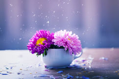 Pink aster flowers in a vase Stock Images