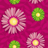 Pink aster seamless floral pattern Stock Images