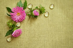 Pink asters composition Stock Photos