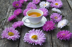 Pink asters Stock Photography